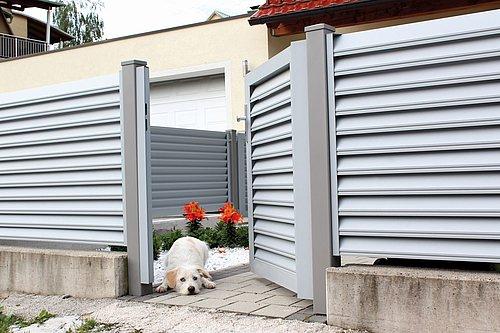Blickdichter Lamellenzaun mit passender Gehtür in silber, Modell Trento, im geöffneten Tor liegt ein Hund